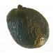 Shaker fruits - AVOCAT - Roots